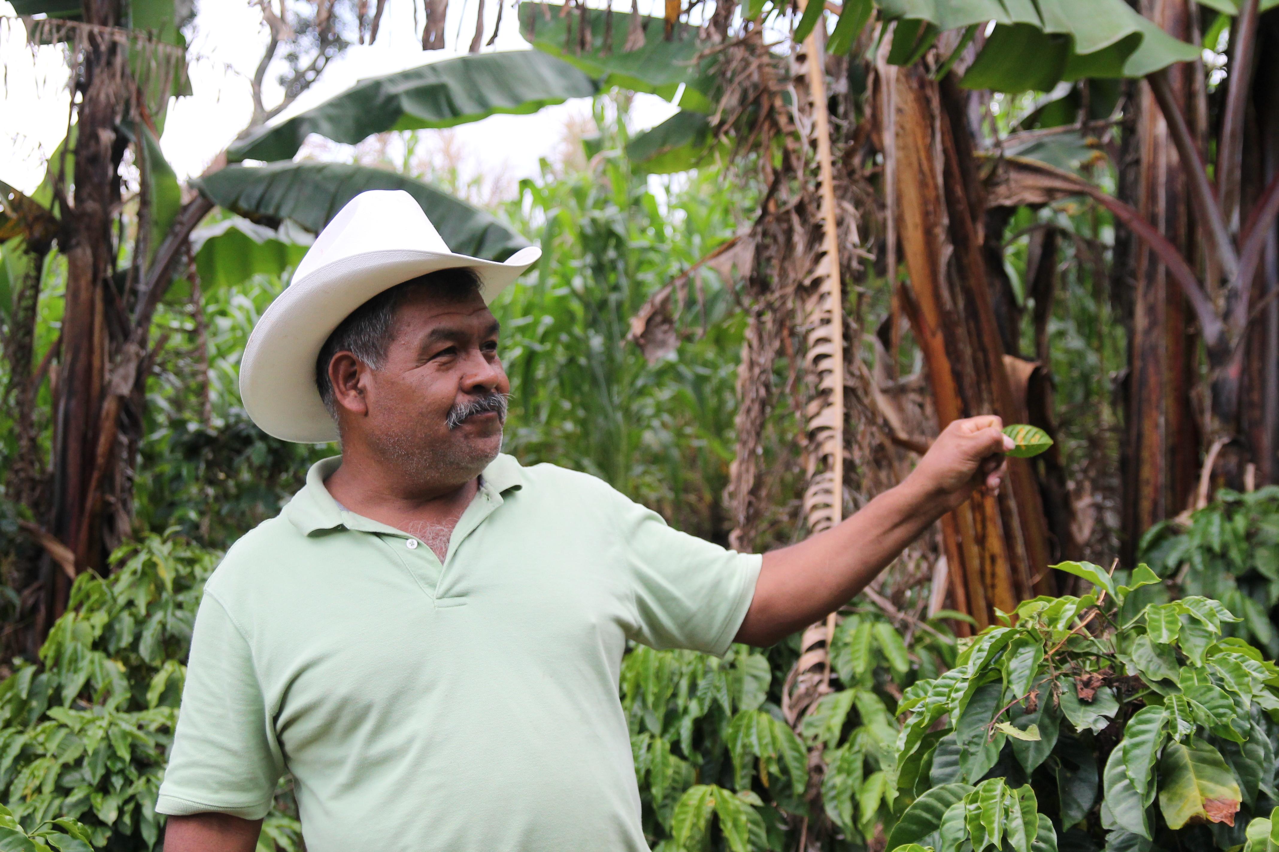 Coltivatore di caffè
